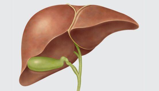 liver_awareness